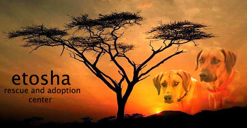 Etosha Rescue and Adoption Center